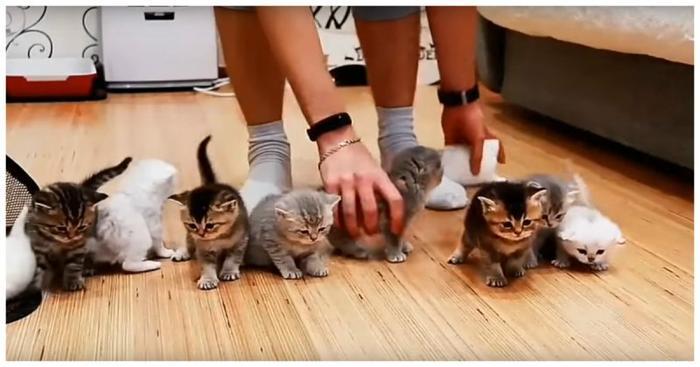 Котомиссия невыполнима: попытка усадить перед камерой 10 котят видео, животные, коты, прикол