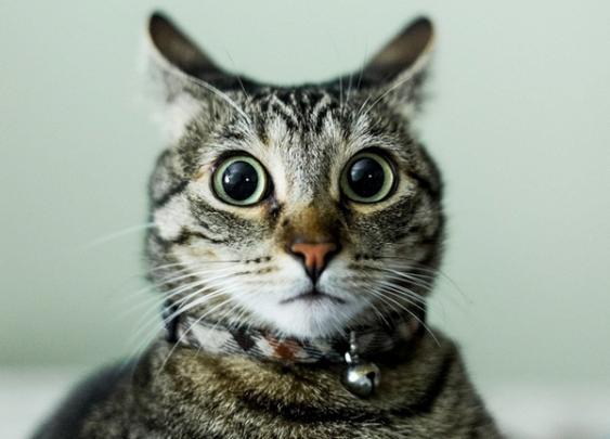 Ученые посчитали средний уровень IQ кота
