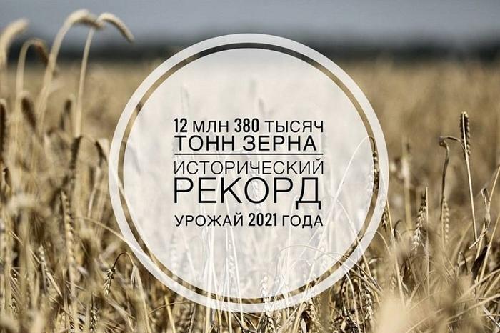 Рекордный урожай зерна собрали на Кубани