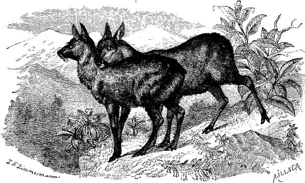 Из Wikimedia Commons, бесплатного хранилища мультимедиа.