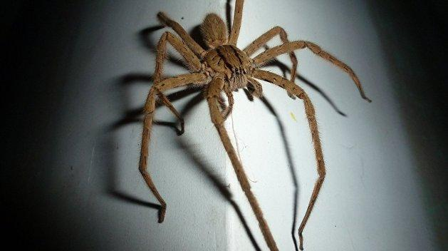 Ядовитый паук оставил украинца без ног — фото