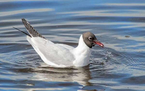 Птицы-Сибири-Описания-названия-и-особенности-птиц-Сибири-92