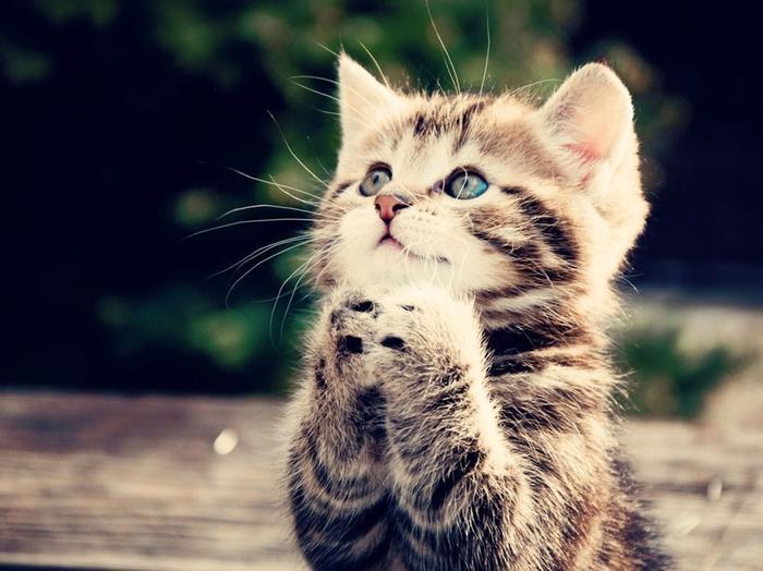 Его хозяин глухой и поэтому коту пришлось приспосабливаться! Смотрите, как он просит еду!