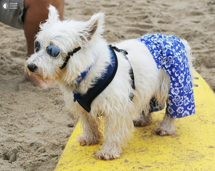 Собаки - серфингисты 2