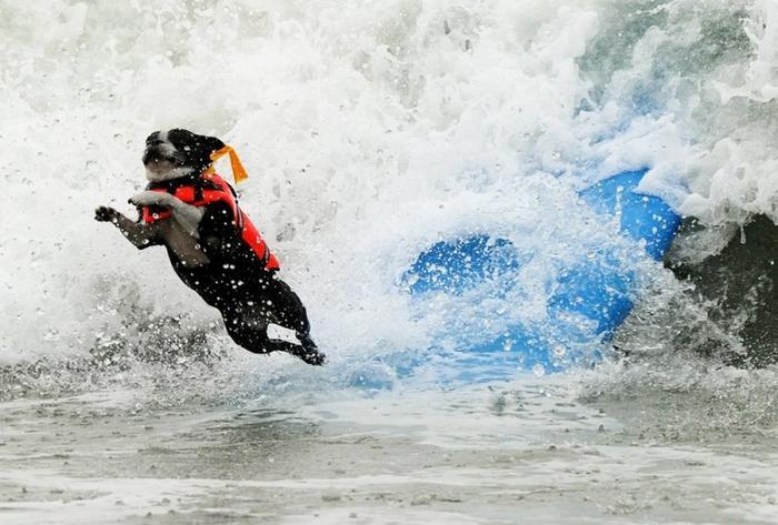 Собаки - серфингисты 3