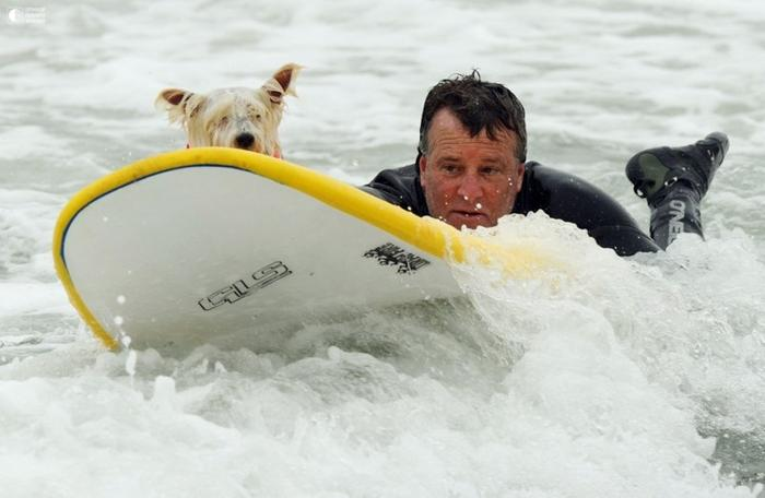 Собаки - серфингисты 5