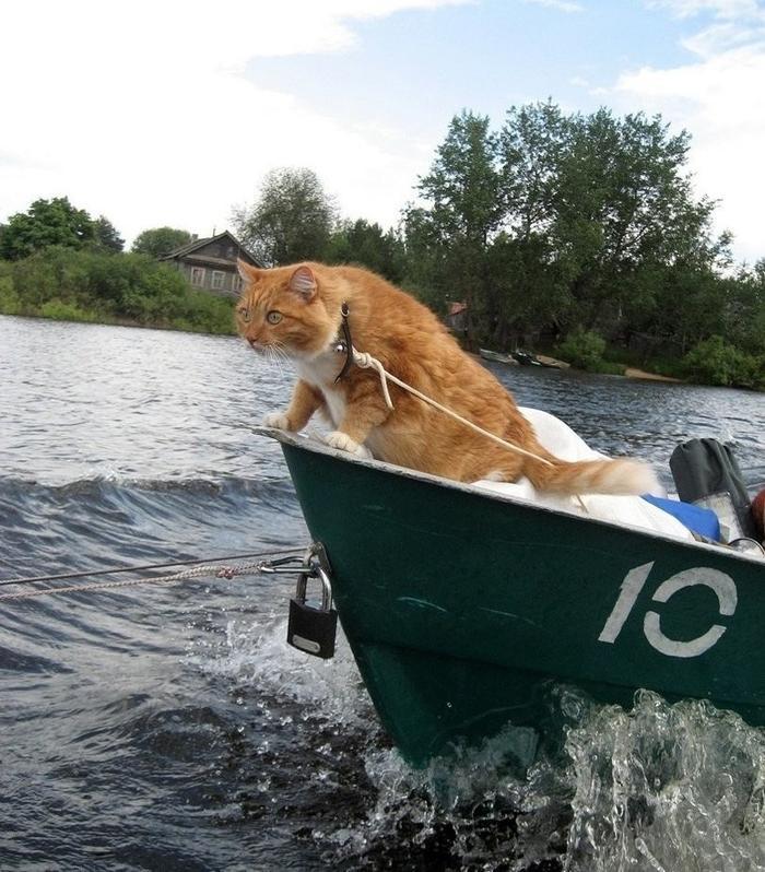 смешная картинка рыбак на лодке девчонки показали