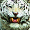 WhiteTigress