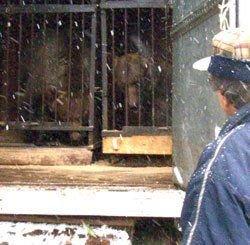 В цирке медведь напал на ребенка
