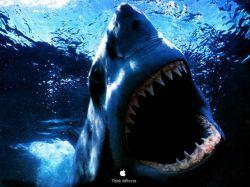В Австралии акулы напали на двух человек
