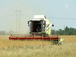 Засуха разоряет фермеров на юге России