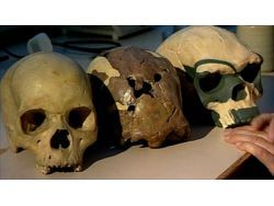 ...Иво-Элеру (Нигерия), которому 13 тыс. лет (его обнаружили в... Слева направо: череп современного человека...