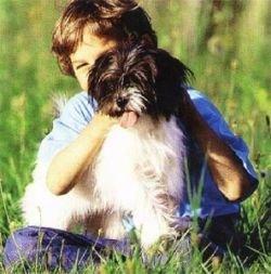Когда рядом нет хозяина, собака ведет себя более разумно