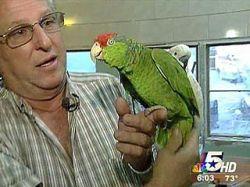 Вежливый попугай сдал хозяину грабителя. Преступнику это стоило жизни