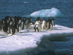 Одним из главных торговых партнеров Украины стала Антарктида