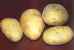 ООН объявила Международный год картофеля