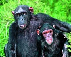 Вице-мэр столицы Индии Сурджит Баджва скончался после нападения обезьян