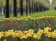 Открылcя первый в России банк ДНК исчезающих растений