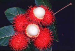 Как правильно есть экзотические фрукты