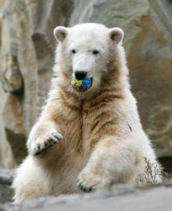 Новые подробности из жизни медвежонка Кнута (фото)