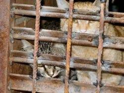 Осеннее обострение Департамента ЖКХ, или кому мешают кошки
