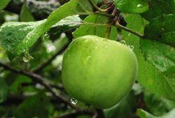 Яблоко - самый полезный фрукт на свете