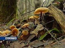 В Тамбовской области семья отравилась грибами со смертельным исходом
