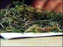 Избыток марихуаны усиливает боль