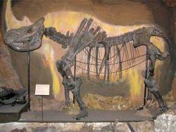 Якутские ученые потеряли тушу шерстистого носорога