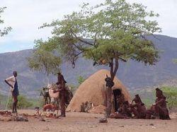 В Намибии 68 человек отравились, сообща съев одну собаку