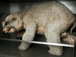 В австралии обнаружены останки
