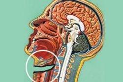 Экстремальная хирургия. Врачи пришили оторванную голову и восстановили печень
