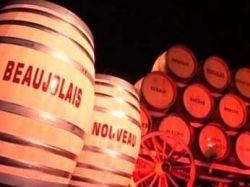 Французы порадовали винолюбов: на рынок выходит розовое  вино Божоле нуво (Beaujolais nouveau)