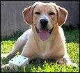 Эксперименты ученых: отношения собаки и ребенка