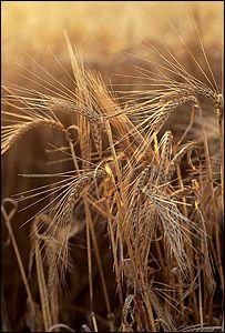 Эксперт ООН: выращивание урожаев с целью производства биотоплива - преступление