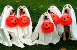 Карнавальные костюмы на Хэллоуин для ваших питомцев от журнала Time Magazine (фото)