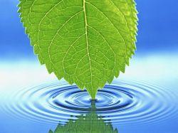 Ученые доказали, что растения способны чувствовать