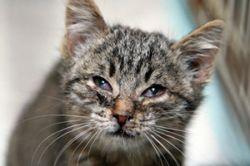 В Троице-Сергиевой лавре по благословению архимандрита утопили более 30 котят