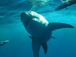 Туристы поймали акулу на пляже во Флориде (видео)