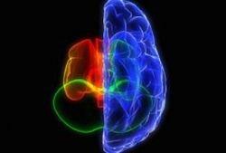 За креативность отвечает правая половина мозга