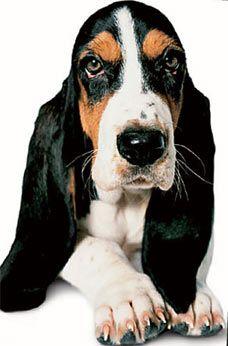 Собаки, глисты и каблуки: самые безумные открытия ученых