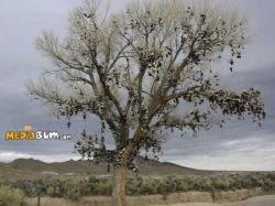 Дерево желаний, на котором висят ботинки (фото)