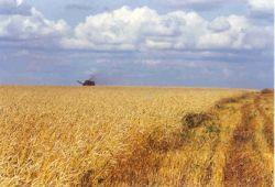 Госрезервы продадут на бирже пшеницу по установленной Минсельхозом цене