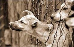 Жителям домов на Юго-Западе Москвы не дает покоя стая бродячих собак