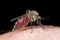 Первая группа крови защищает от осложнений малярии