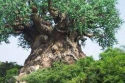 Дерево, символизирующее живую природу (фото)
