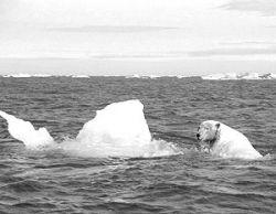 Промышленность Соединенных Штатов готовится получить свою часть арктического шельфа