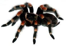 Австралийский насильник обвинил в своем поступке паука
