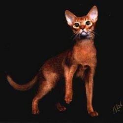Геном кошки расскажет, как лечить человека