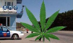 Наркоторговцы прятали два мешка марихуаны на посту ГАИ